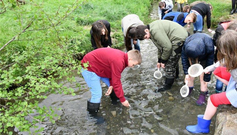 18 Schüler nehmen das Gewässer an der Ammerquelle unter die Lupe GB-Foto: Holom