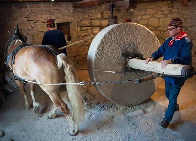 """Pferd Adrian und die """"Saadmänner"""" im Einsatz  GB-Foto: Schmidt"""