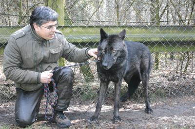 noomi ist ein hund kein wolf walsroder zeitung. Black Bedroom Furniture Sets. Home Design Ideas