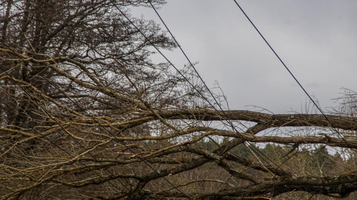 Waldenbuch: Baum stürzt nach Sturm auf Hochspannungsleitung ...